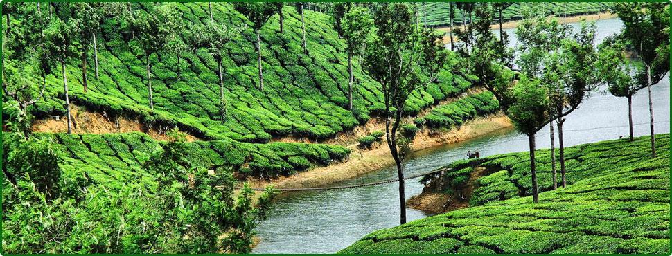 Mullaperiyar Dam Row Hurts Munnar Tourism | Easy Destination Blog